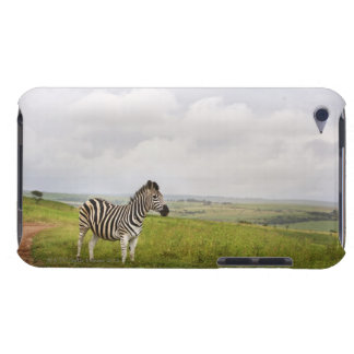 Zebra in the countryside, South Africa iPod Case-Mate Case