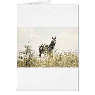 Zebra in the Nature Card
