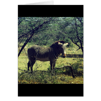 Zebra in the Trees Greeting Card