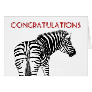 Zebra isolated on white, Congratulations. Greeting Card