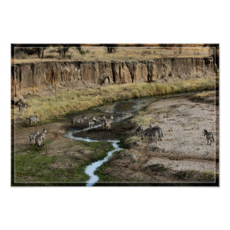 Zebra Landscape 1 Poster