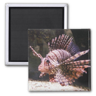 Zebra Lion Fish Magnet