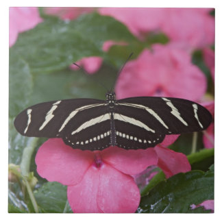 Zebra Longwing, Heliconius charitonius Large Square Tile