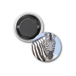 Zebra looking at you 3 cm round magnet
