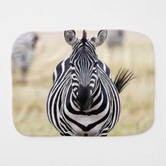 Zebra looking at you burp cloths