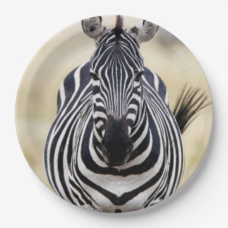 Zebra looking at you paper plate