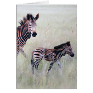 Zebra mom and baby greeting card