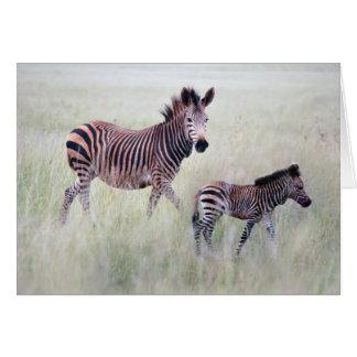 Zebra mom and baby card