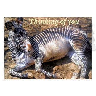 Zebra of love_ cards