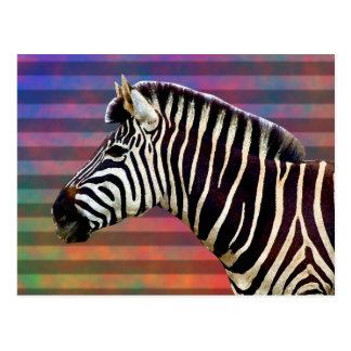 Zebra on Psychedelic Stripes Postcard