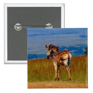 Zebra on the mountain 15 cm square badge