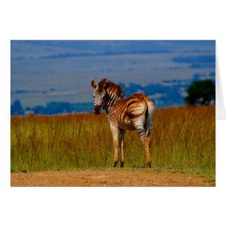 Zebra on the mountain greeting card