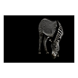 Zebra P4435 Print