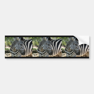 Zebra Pose Bumper Sticker