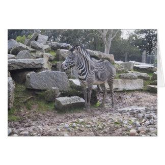 Zebra posing card