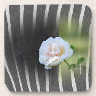 Zebra Print White Rose Beverage Coaster