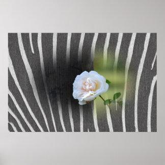 Zebra Print White Rose