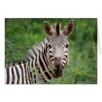 Zebra profile cards