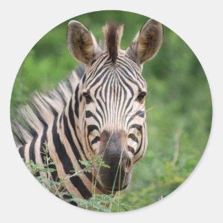 Zebra profile classic round sticker