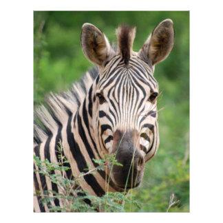 Zebra profile flyer design