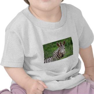 Zebra profile tshirts