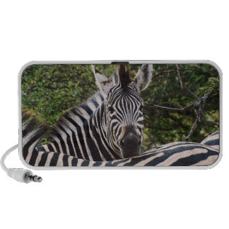 Zebra Mp3 Speakers