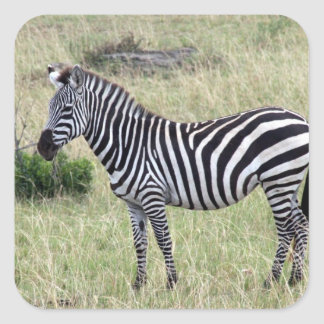 zebra stand square sticker