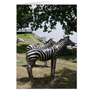 Zebra statues greeting card