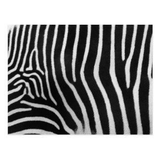 Zebra Stripe Pattern Postcard