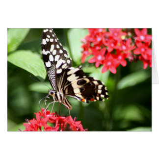 Zebra Striped Butterfly Greeting Card