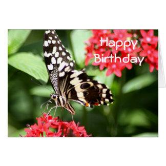 Zebra Striped Butterfly Greeting Card