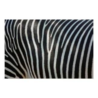 Zebra Stripes 1 Poster
