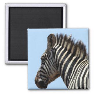 zebra stripes blue magnet
