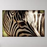 Zebra Stripes Closeup Poster