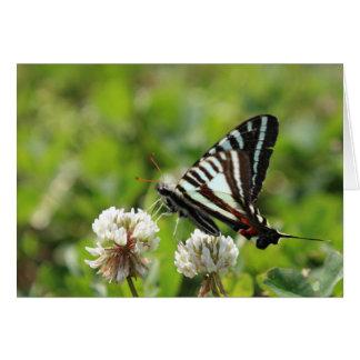 Zebra Swallowtail Butterfly Card