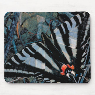 Zebra Swallowtail Butterfly Mouse Pad