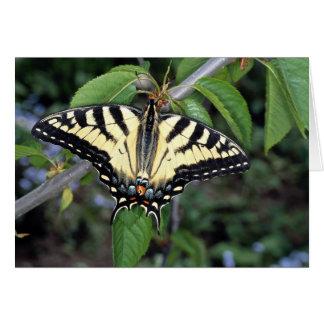 Zebra swallowtail, Ontario, Canada Cards