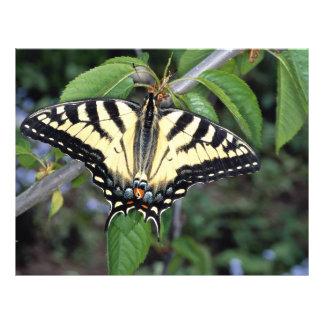 Zebra swallowtail, Ontario, Canada Flyer Design