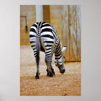 Zebra Tail Poster
