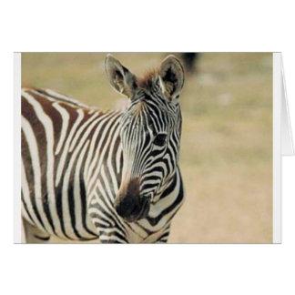 ZEBRA WILDLIF GREETING CARD