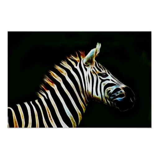 Zebra with black and white stripes in Africa Print