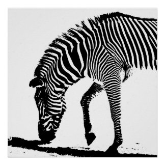 Zebra with Shadow Poster
