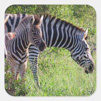 zebra youth square sticker
