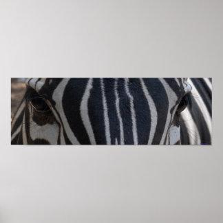 Zebra Zebra on the wall Poster