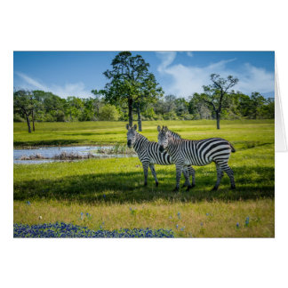 Zebras and Bluebonnets Card