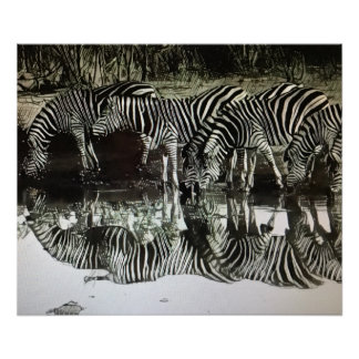 Zebras at Watering Hole Poster