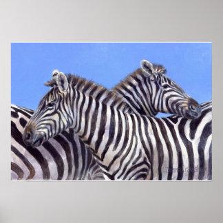 Zebras by Donna Crawshaw Poster
