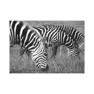 Zebras Canvas Prints