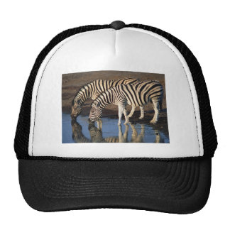 Zebras Drinking at the Watering Hole Mesh Hat