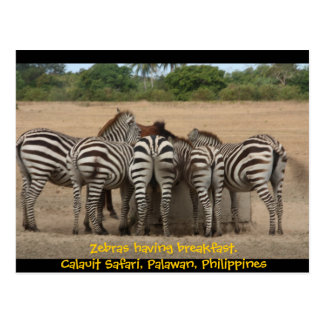 Zebras Having Breakfast Postcard